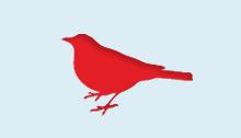 Bird_2